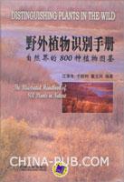野外植物识别手册-自然界的800种植物图鉴