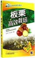 板栗高效栽培-高效种植致富直通车-09