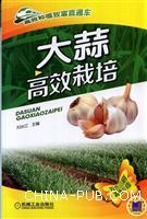 大蒜高效栽培