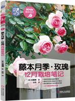 藤本月季玫瑰12月栽培笔记